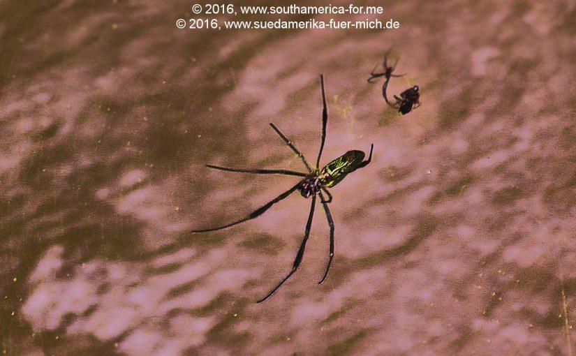 Das Große Wasser – Iguaçu – 04 – Die Tierwelt